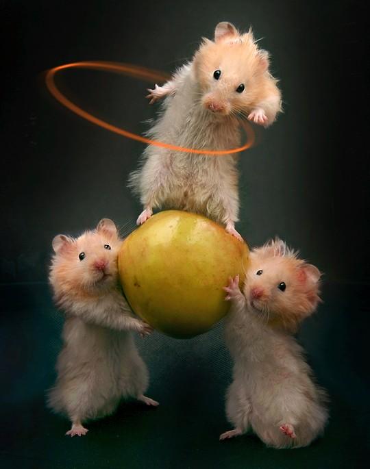 http://delirenstock.free.fr/images/hamster2.jpg